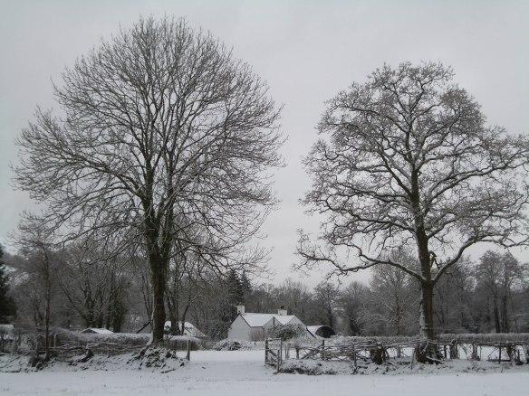 Jan Snow 2