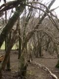 woodland arches