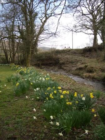 photos for blog daffs at riverside