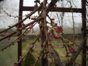 photos for blog peach blossom