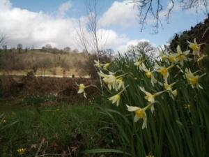 photos for blog species daffs and new view